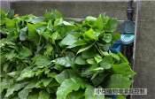 长沙立体绿化滴灌系统报价立体绿化滴灌系统厂商