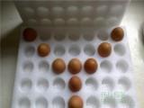 南宁品质优良的蛋托推荐,钦州鸡蛋蛋托