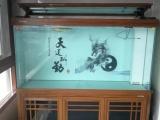 青浦水族市场,青浦锦鲤鱼批发,青浦观赏鱼鱼缸专卖,鱼缸清洗