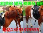 山东什么地方有卖骑乘马的 骑乘马出售价格