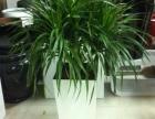 花卉绿植租赁 办公室绿化租赁 花卉绿植养护 花卉租摆布置