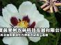 宁夏紫斑牡丹种植基地-紫斑牡丹实验基地-宁夏牡丹