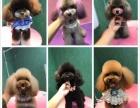 济宁SHOW DOG宠物美容学校