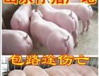 三元仔猪,量大可免费送猪到家,山东日照仔猪价格