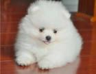 宠物)石狮到湖南省宠物托运检疫证保险办里专车托运宠物多少钱