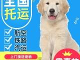 全国宠物运输 宠物托运 国内国际宠物托运 宠物运输