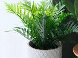 威海办公室绿植盆栽养护公司