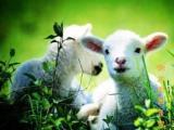 内蒙古呼伦贝尔咩咩羊旅游,定制包车团,一价全含纯玩团