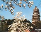 苏州一日游 苏州园林 苏州旅游