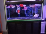 上海鱼缸定制,上海鱼缸维护,上海鱼缸观赏鱼专卖