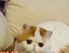 小可爱—加菲猫超级贴心小棉袄丨开启幸福新生