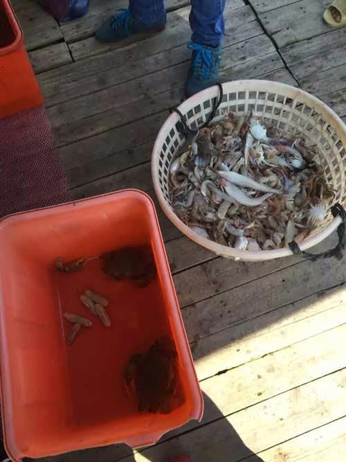 温州洞头休闲捕鱼,来到海边,少不了丰富的海鲜大餐