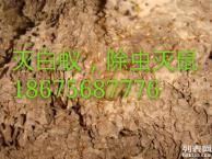 供应用于除虫灭鼠 白蚁防治 灭蟑螂灭跳蚤的茂名专业灭老鼠公司