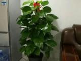 杭州办公室植物出租室内盆景花卉租摆园林绿化养护