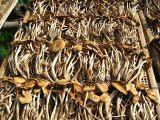 新鲜茶树菇批发