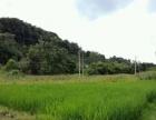 勐海工业园区八公里 厂房 大棚种植 养殖