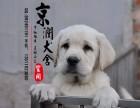 烟台哪里卖纯种拉布拉多犬的