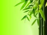 观赏竹 供应粉单竹苗大单竹苗白毛单竹苗油单竹苗
