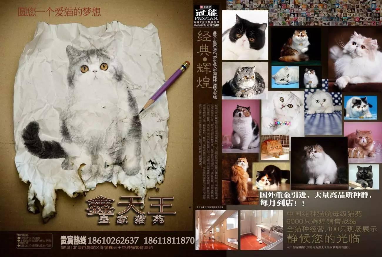 鑫天王皇家猫苑-自2001年起