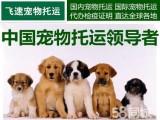 成都飞速宠物空运提供上门接送服务宠物托运就选飞速