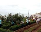 青岛周边游 爬崂山 赏美景 吃农家宴 品崂山茶