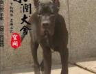 温州哪里有卖大丹犬的