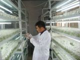 供优质组培脱毒蓝莓苗 南方果树苗新品种 南高丛蓝莓盆载薄雾品种