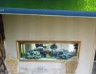 专业海水水族箱 设备 及生物 造景 专业鱼缸清洗维护