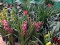 绿植批发,花卉租摆、会议租摆、展会租摆
