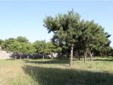 北京市丰台区,丰台区附近的公墓介绍