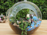 雅雅玻璃 微景观玻璃瓶 装饰摆件 创意玻璃花瓶多功能用途批发