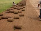 北京房山琉璃河园林绿化草坪基地供应高羊茅早熟禾冷季型混播草坪