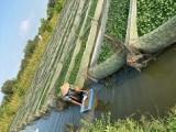 养鱼养虾不如养水蛭高价回收水蛭养殖技术学习