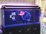 上海賣魚缸賣水族箱賣錦鯉魚賣觀賞魚賣龍魚賣發財魚賣冷水魚