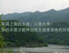 【自家果园】杭州周边户外活动 果园水果葡萄采摘团购