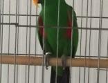 宣武銀龍和紅鸚鵡
