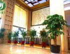 杭州专业绿植租赁,绿植租摆,庭院景观设计,绿化施工,鲜花配送
