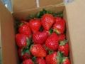 郑氏奶油草莓开摘草莓。烧烤。农家乐。钓鱼等等活动