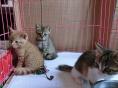 江门市出售网红小橘猫幼崽