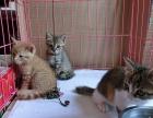 固原市宠物橘猫多少钱一只