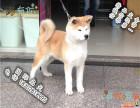 品相好一点的秋田犬哪里有卖的 多少钱