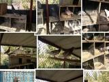 山东省临沂常年出售信鸽,出售治疗赛鸽单眼伤风特效药,45一瓶