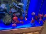 闵行定制鱼缸,观赏鱼出售,卖鱼 ,卖鱼缸