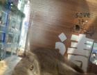 家养英短蓝猫便宜出售 有意联系