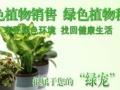 绿植,打造办公自然生态