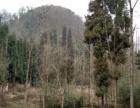 彭州白鹿镇地质公园商业用地1527平米
