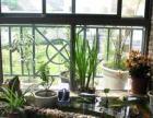 重庆家庭阳台鱼池假山,锦鲤鱼池设计与施工