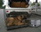 四川宠物托运,成都宠物托运公司,宠物托运,免费上门