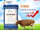 北京中博特肉牛预混料,降低肉牛饲养成本
