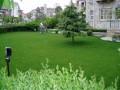 园林绿化草坪基地特价出售高羊茅草坪早熟禾草坪北京山东天津特供